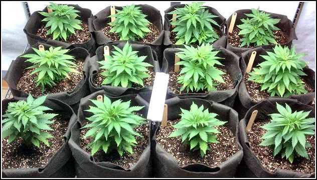 Seed sale - free seeds & free shipping! | Maine Seedlings & Clones